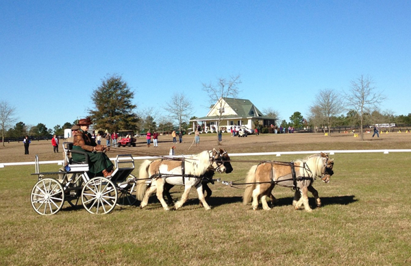 Muffy Seaton carriage driving vacations Aiken South Carolina
