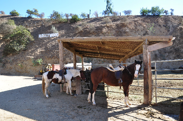 Horse ride through Griffith Park in the Hollywood Hills of California