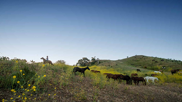 riding through wildflowers at the alisal guest ranch and resort