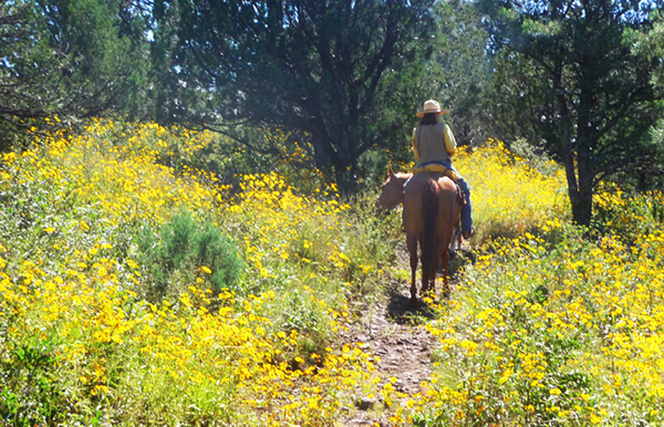 yellow flowers riding nm