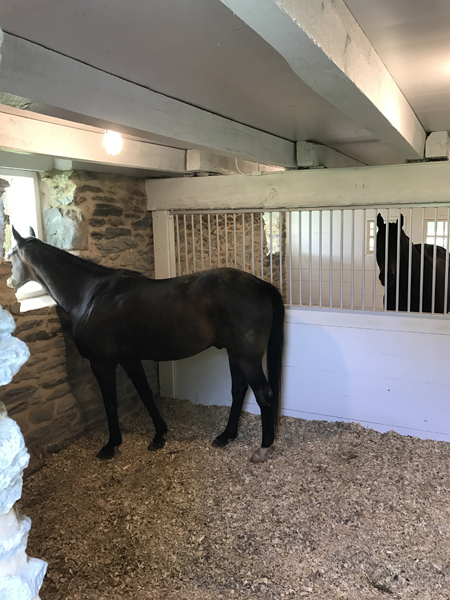 horses in newly renovated stalls bank barn restoration