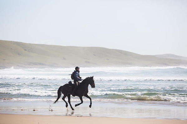 race the wild coast kwacha galloping on the beach