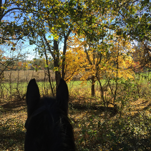 between the ears view of pasture from horseback