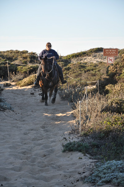beach horse riding on Monterey Bay, California