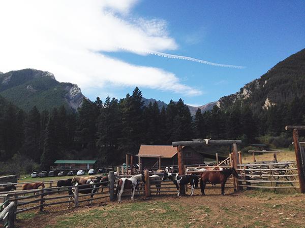 63 ranch montana