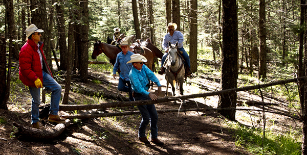 cutting trees and horses help with trail clean up