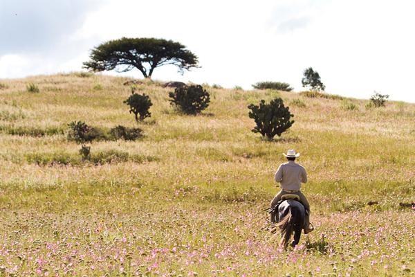 horseback ride mexico rancho las cascadas