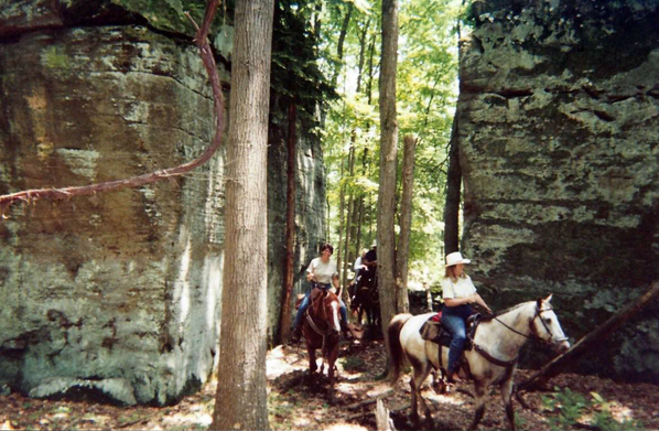 Allegheny Forest horseback riding
