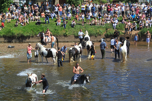 Horses being washed in the River Eden during the Appleby Horse Fair