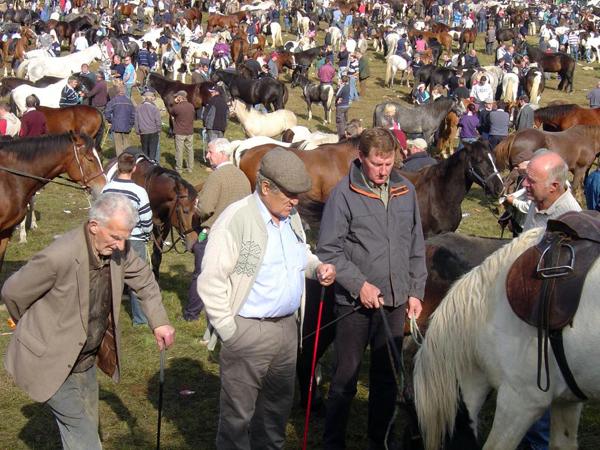 Ballinasloe Horse Fair Ireland