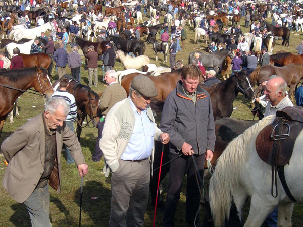 Ballinasloe horse fair riding vacation
