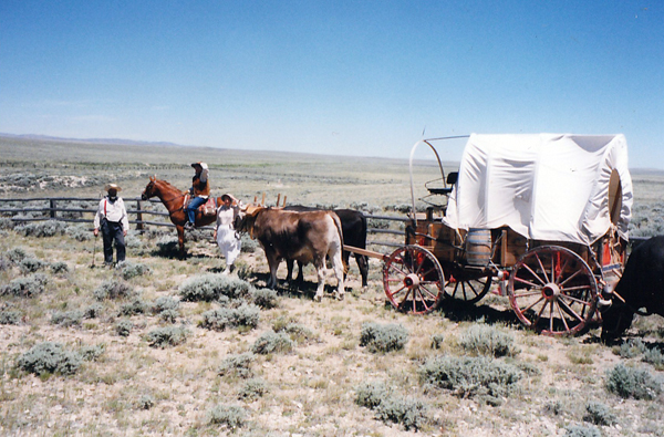 oxen team on the Oregon Trail