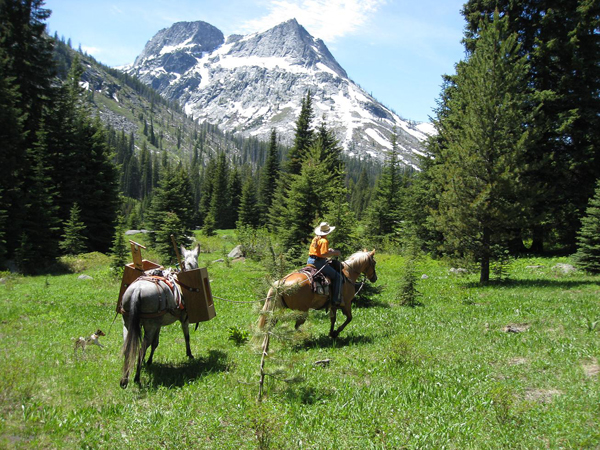 A Selway-Pintler Wilderness Back Country Horsemen volunteer project takes author, Kathy Hundley, and her stock, through 7 Mile Meadow while on a clearing project. Photo by Terry Reed