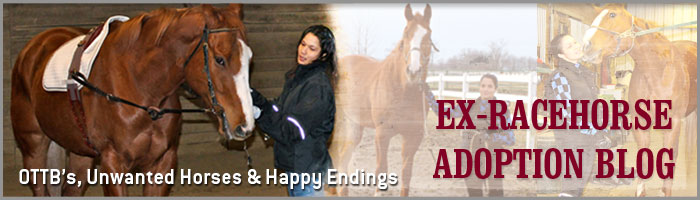 Ex-Racehorse Adoption Blog