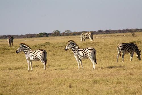 Makgadikgadi Pans Safari