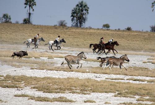 Makgadikgadi Pans zebra migration