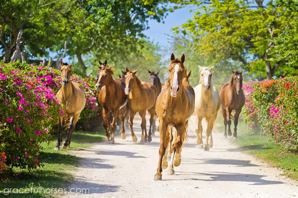 braco stables horses jamaica