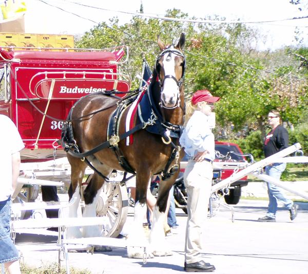 Riding Breeches - Tuffrider, Ariat, Kerrits & More - Horse.com