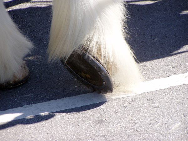 budweiser clydesdales shoes