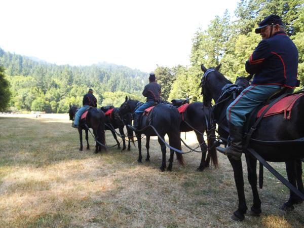 CHAS artillery six horses