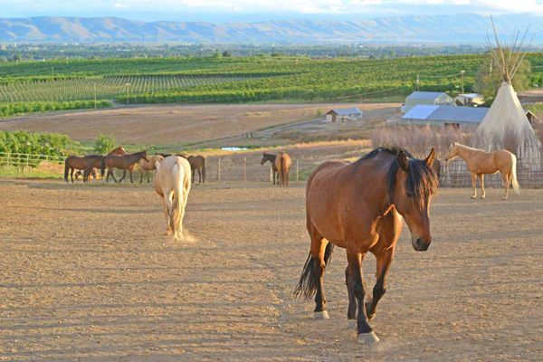 Equestrian Travel Articles - 4 Great Horseback Riding Tours for ...
