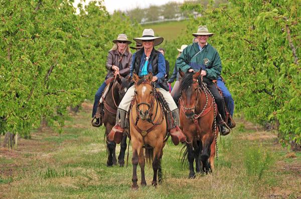 Cherry Wood B&B Vineyard Horse Ride
