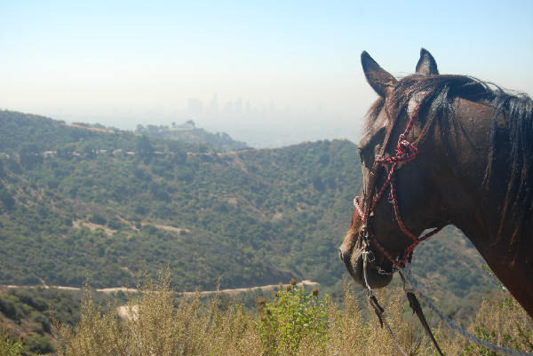hollywood horse ride
