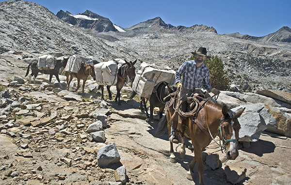 Andy leads a string of pack mules down from Donohue Pass