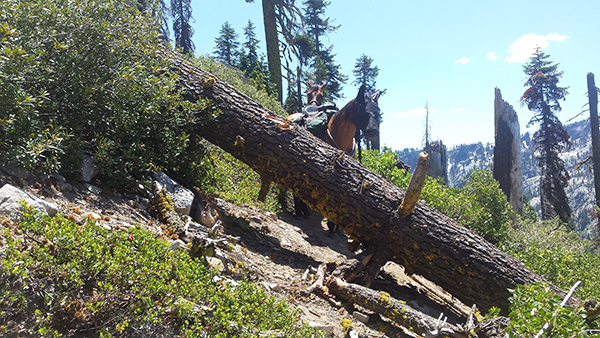 downed tree on pacific crest trail horse riding