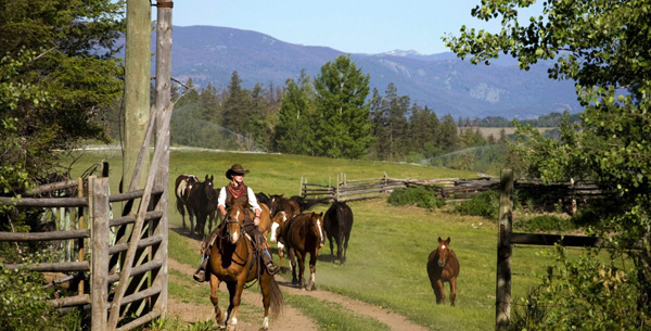 Echo Valley Horse Riding