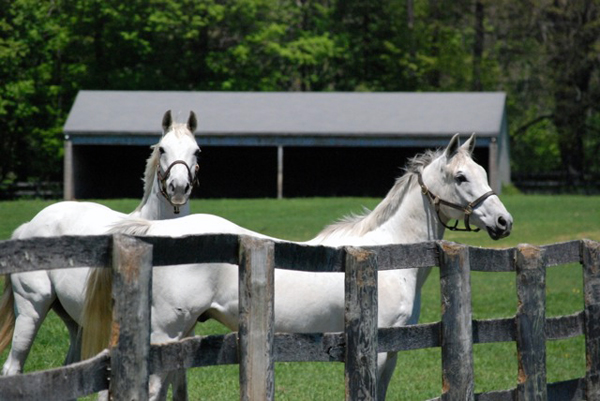 aiken thoroughbred rescue