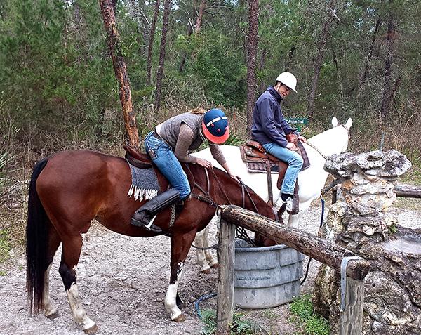 Florida Greenway water horse