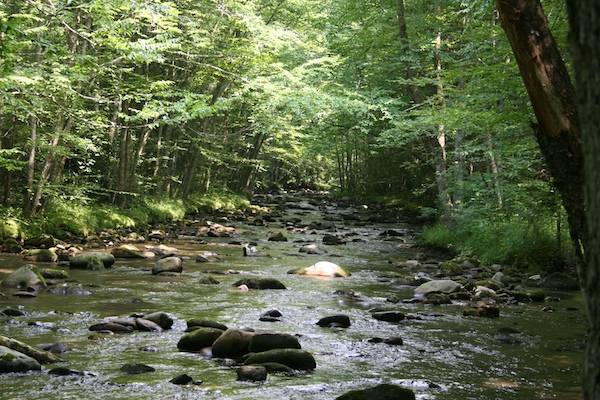 Great Smokey Mountains stream