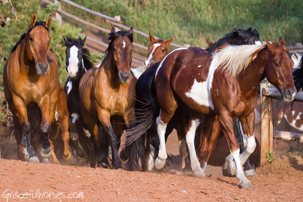 gros ventre river ranch horses running