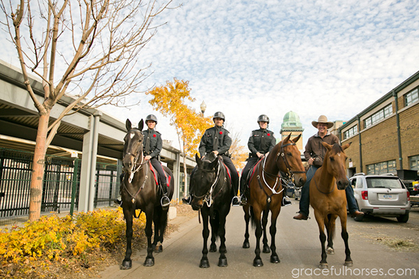 Guy McLean Royal Winter Fair Toronto Mounted Police Horses