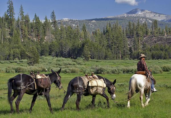 High Sierra horse pack trip