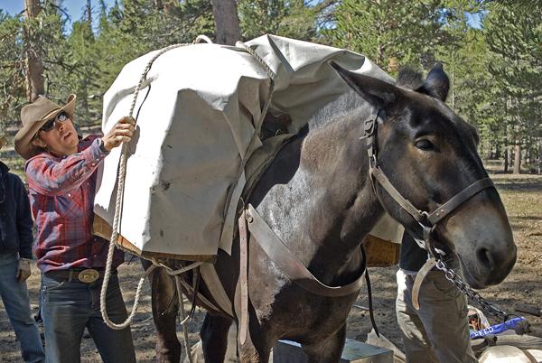 High Sierra horse riding