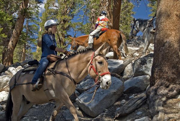 High Sierras horse riding