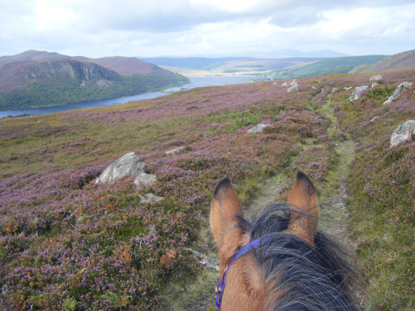 Highlands Unbridled Through The Ears Horse Ride