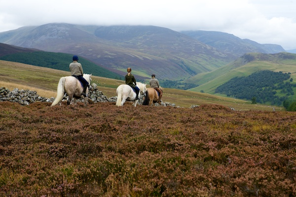 Highlands Pony trek