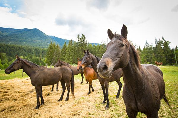 Hillary Schneider horse retreat