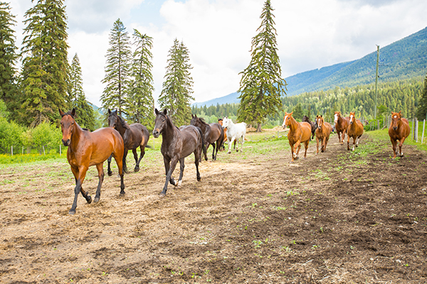 Hillary Schneider horse retreats British Columbia