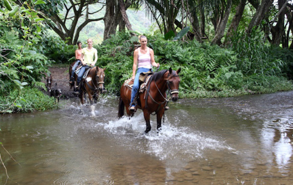 Waipio Valley horse riding
