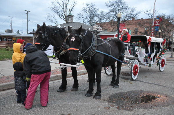 Percheron horses Christmas
