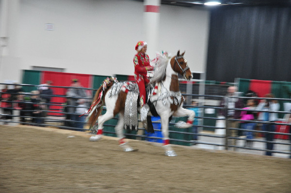 Saddlebred Christmas horse parade