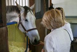 horses in florida