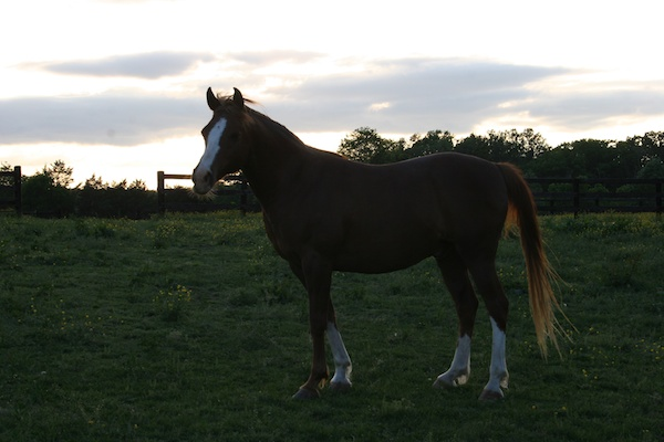 Would you ever buy a horse without seeing it in person?