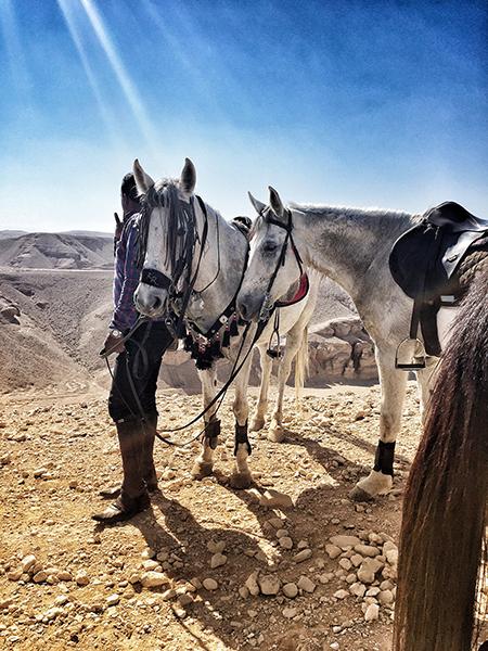 horses of ride egypt valley of the kings new year celebration