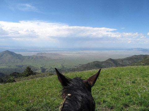 horseback riding views new mexico