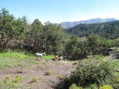 new mexico ruidoso horse trails